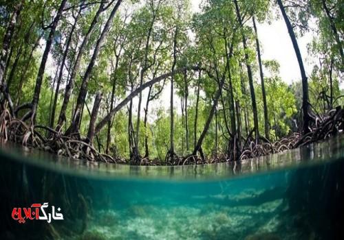 بهای نابودی جنگلهای حرّا چیست؟
