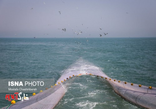 تبعات صیادی غیرمجاز در خلیج فارس؛ از مرگ گربهماهیان تا مرجانها