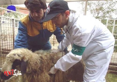 ۲۹ اکیپ در استان بوشهر بر ذبح دام در عید قربان نظارت میکنند
