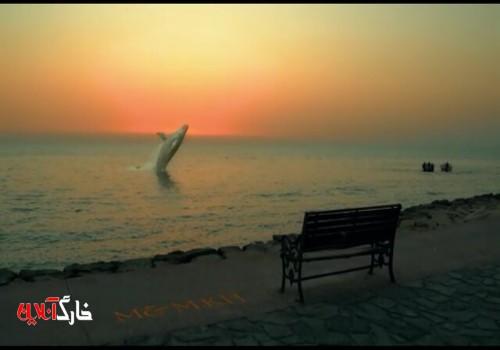 داستان نهنگ در ساحل بوشهر چه بود؟+فیلم
