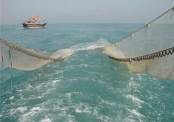 صیادان بوشهری برای صید طلای صورتی به دریا زدند