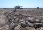 توقف ساختوساز غیر مجاز یک پتروشیمی در محوطه باستانی نجیرم