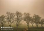 سرعت باد در استان بوشهر افزایش مییابد/ احتمال نفوذ گرد و غبار