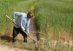 پرداخت ۲۵۰میلیارد ریال غرامت به کشاورزان بوشهری